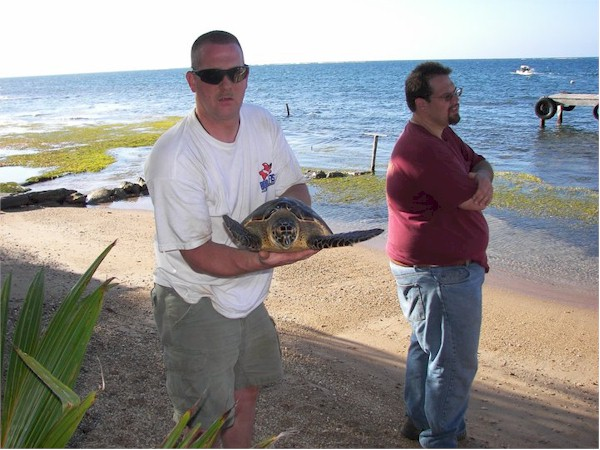 Ray releasing an endangered Hawksbill sea turtle that he